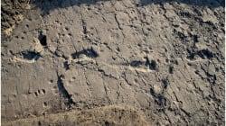 On a retrouvé les empreintes de Chewbacca, le plus grand australopithèque jamais