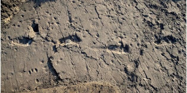 Les empreintes de pas de plusieurs australopithèques  ont été retrouvées en Tanzanie
