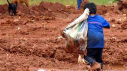 Trabalho infantil: 2015 teve aumento de 8,5 mil crianças de 5 a 9 anos