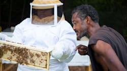 Black Beekeepers Are Transforming Vacant Lots Into Bee