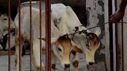 Kerala Congress Workers Booked For Slaughtering Calf In