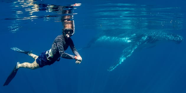 You can swim with whales in WA for the next four months as part of a government trial.
