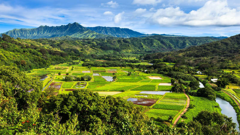 Hawaii's Farm-to-car drive-thrus skip the trip to the grocery store