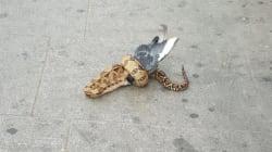 Ces Londoniens ne s'attendaient pas à croiser un boa constrictor dévorant un pigeon en pleine