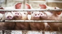 Así podría acabar la crueldad animal en
