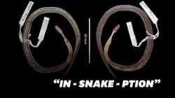 Une nouvelle espèce de serpent découverte... dans le ventre d'un autre