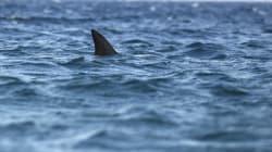 Une employée de Wall Street se fait attaquer par un requin et
