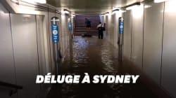 Sydney paralysée après