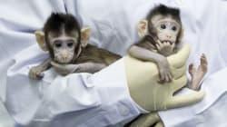 Dalle scimmie all'uomo, prospettive reali e problemi etici della