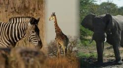 El 75% de las especies del mundo podrían desaparecer a mediados de