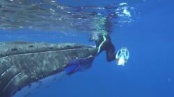VIDEO: Así fue como una ballena salvó a una mujer de un