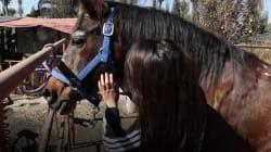 VIDEO: Conoce la terapia asistida con caballos que ayudó a las víctimas del