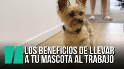 Los beneficios de llevarte tu mascota al