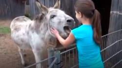 La emotiva reacción de un burro al ver a su
