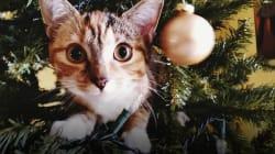 Gatos versus árboles de