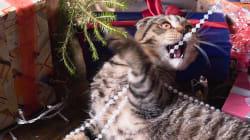 Chat vs sapin, le combat de Noël est de