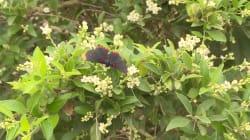 Une réserve de papillons menacée par le mur de Donald