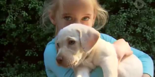 Sasha the Labrador puppy and Maia Hood have been reunited.