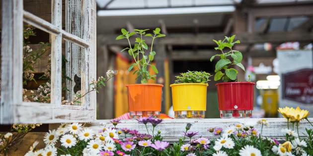 Os vasos autoirrigáveis vão te ajudar a deixar as plantas mais saudáveis.