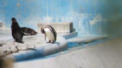 Un delfín y 46 pingüinos viven en el abandono en un acuario de