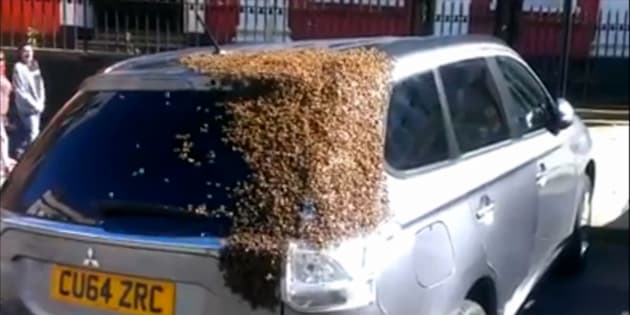 A Welch woman's vehicle is seen covered in bees during a bizarre game of follow the leader.