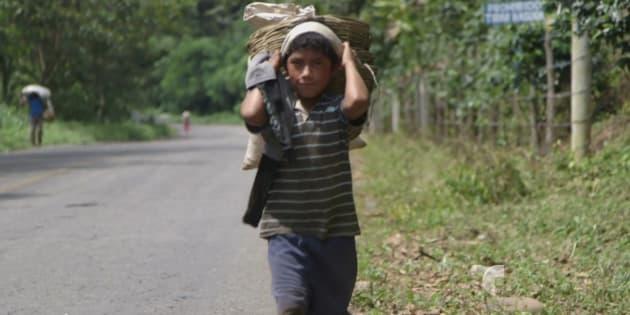 Travail des enfants dans les régions de production de café