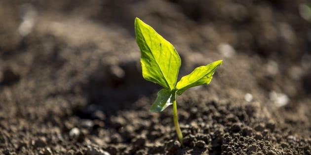 Cette initiative citoyenne et européenne veut protéger les sols.