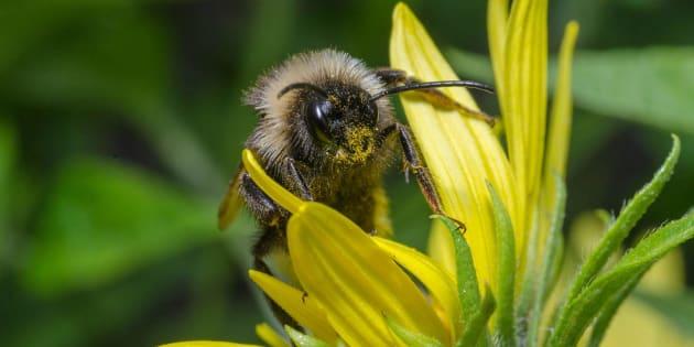Les chercheurs ont démontré qu'ils tuent non seulement les parasites, mais également une longue liste d'espèces non visées, notamment les pollinisateurs.
