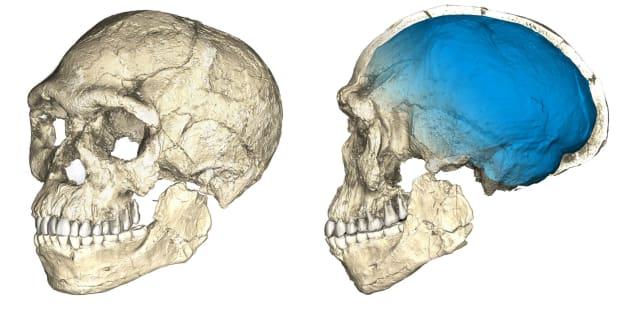 Le découverte qui bouleverse les connaissances sur notre espèce — Homo sapiens