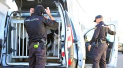 La operación contra la mafia china afecta a 11 provincias con 55