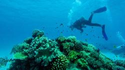 O olhar do mergulhador: As preciosidades da vida de dentro do