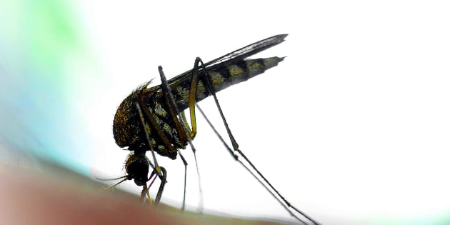 A mosquito in close-up and backlit by a LED-lamp