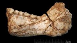 Somos 100.000 años más viejos de lo que