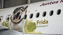 ¡Homenaje de altura! Esta aerolínea pone foto de Frida en un