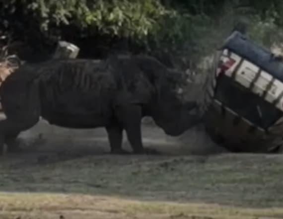 Video shows rhino flip car with man stuck inside