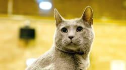 吉沢亮が猫になる。沢尻エリカ演じる主人公を、恋人と思い込むロシアンブルー役です🐱