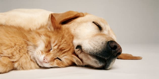 Ce chat et ce chien sont clairement les meilleurs amis de l'homme.