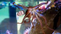Meet Ceph Rogen, The Vancouver Aquarium's Newest