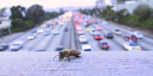 3 enjeux politiques majeurs à relever pour ralentir la dégradation de notre biodiversité