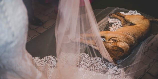O vira-latinha invadiu um casamento causando apreensão em todos os convidados.