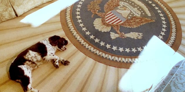 Spot, le chien du président George W. Bush dans le Bureau ovale, le 20 décembre 2001.