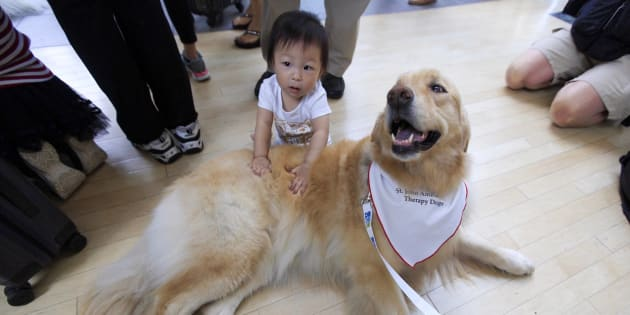 Vancouver International Airport and St. John Ambulance has introduced a therapy dog program.