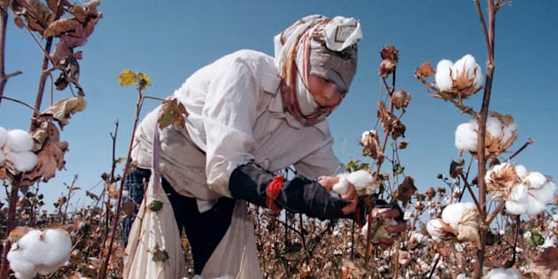 An Uzbek woman picks up cotton in a field outside Tashkent September 24. The harvest is in full swing in Uzbekistan, which relies heavily on cotton exports to support its cash-starved economy.