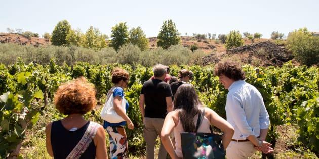 Sicilia e Sardegna, due isole e una grande estate. Tra filari e dune, degustando vini e cinema d