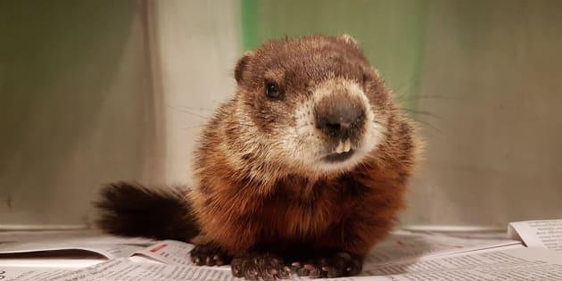 Cobequid Wildlife Rehabilitation Centre/Facebook