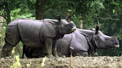 How A Selfie Helped Put Kaziranga Rhino Poachers Behind