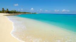 La vita torna a crescere sull'atollo Bikini dopo l'esplosione atomica di 70 anni