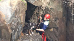 Tasmanian Police Rescued This Very Good Dog From A