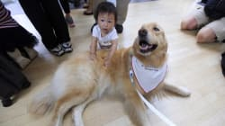 Ruff Flight? Vancouver's Airport Now Has Therapy
