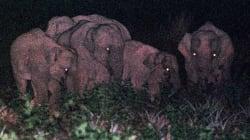 Elefantes se hacen noctámbulos para burlar a los